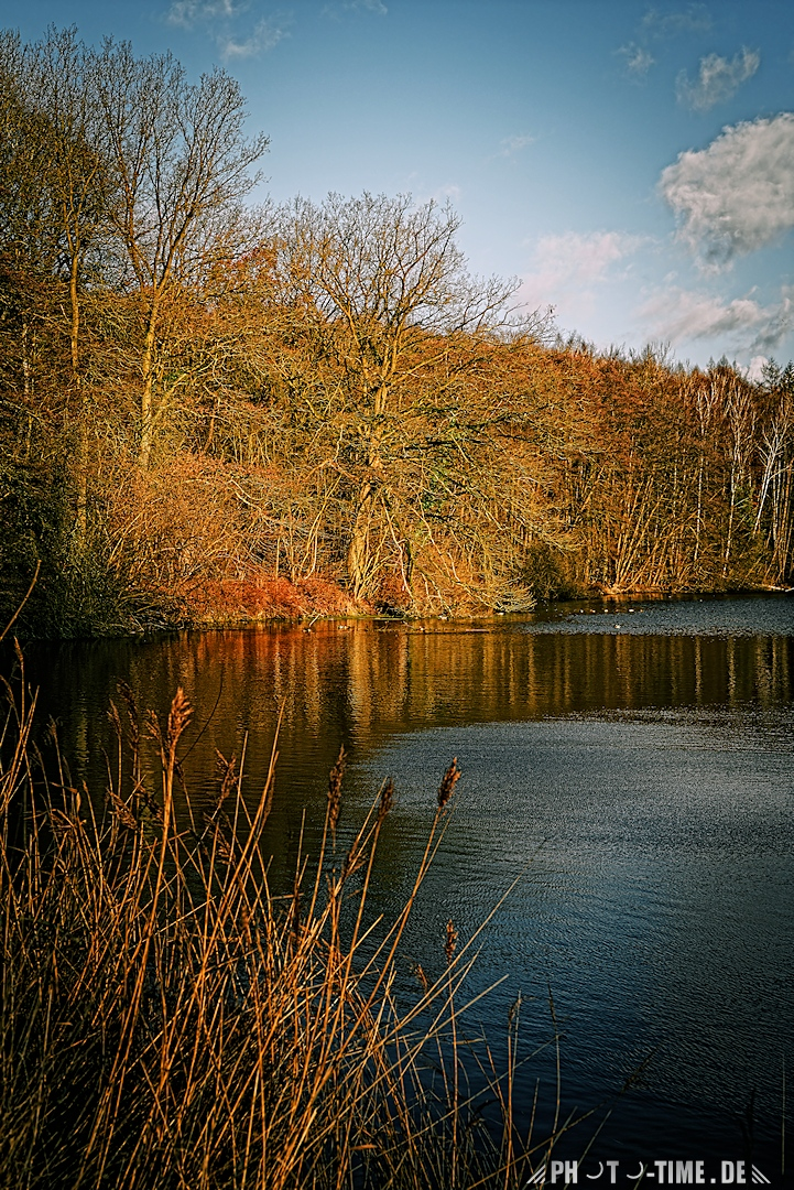 forest_lake